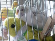鳥の生活リズム