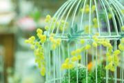 花や緑に癒されて