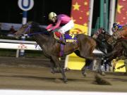 南関競馬と中央競馬