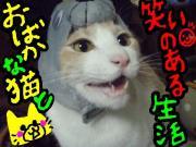 ☆おばかな猫と笑いのある生活☆