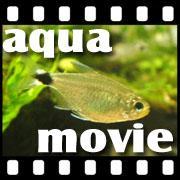 Aqua movie