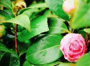 花・趣味の園芸