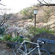 自転車通勤は小旅行♪