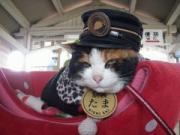 スーパー猫駅長、改め、執行役員「たま」