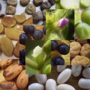 豆知識・豆料理・豆栽培