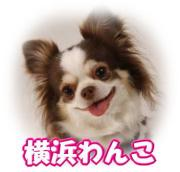 ☆横浜わんこ☆