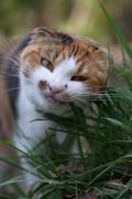 猫のキバチラ同盟