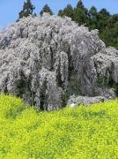 福島県の絶景
