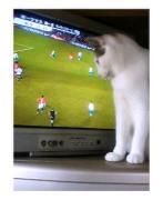 ネコといっしょにサッカー、野球を...