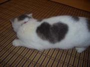 ☆ステキ☆猫たんの模様