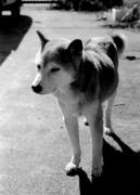 柴犬!!!