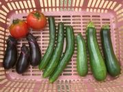 みんなで楽しく家庭菜園