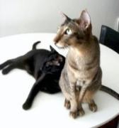 猫って最高!