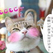 猫フォトマンガ毎日見たい!