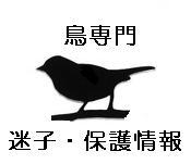 鳥類専門 迷子・保護情報