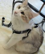 猫のファッション(コスプレ含む)