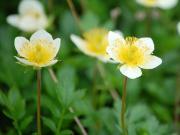 山に咲く花