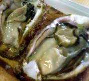 天然岩牡蠣(てんねんいわがき)