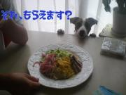 食いしん坊で元気なワンちゃん集まれ〜☆