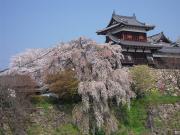 奈良の魅力、もっと知りたい