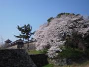 奈良のこと、もっと知りたい