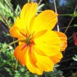 花の逆光写真