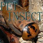 ペット昆虫