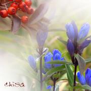 野の花・山の花