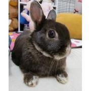 うさぎ(ウサギ)全般 ̄(= ^ x ^ =) ̄