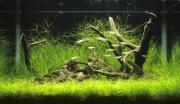 水草コレクター