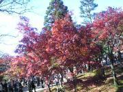京都の紅葉を観ました!
