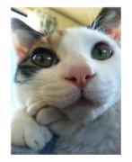 日本猫と言えば... 三毛猫さんでしょ!