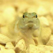 淡水魚・淡水の生き物