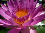 季節を感じる身近な花