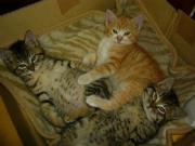 猫仲間・・^^