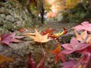 琵琶湖周辺の野山歩き