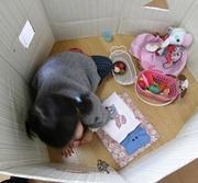 ベビー&キッズ子供服・雑貨・おもちゃ