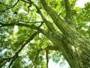 林業関連ニュース