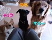 集まれ!犬好き・子ども好き☆
