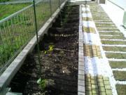 家庭菜園はじめてみました
