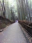 そうだ!京都に一人旅