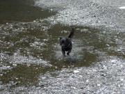 日本犬の写真と動画