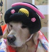 犬・いぬ・イヌ・dog・わん!ワン!