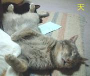 うちの猫の特技