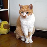 美猫さんいらっしゃい