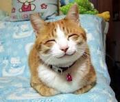 猫と賃貸住宅