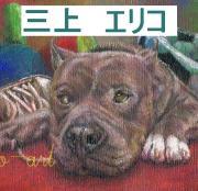 大型犬の高齢ワンコの飼い主さん