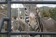 大好き!京都市動物園