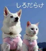 猫と犬の居る暮らし