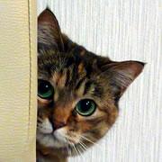 猫の魅力☆猫の魔力